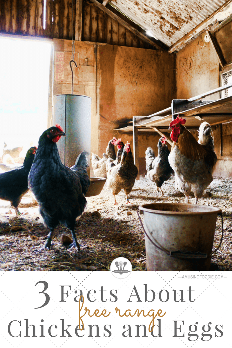 "The term ""free-range"" can mean a variety of things, especially when you're talking about chickens. Read on to understand some facts about free-range chickens, as well as some of other other labels you find on egg cartons these days."