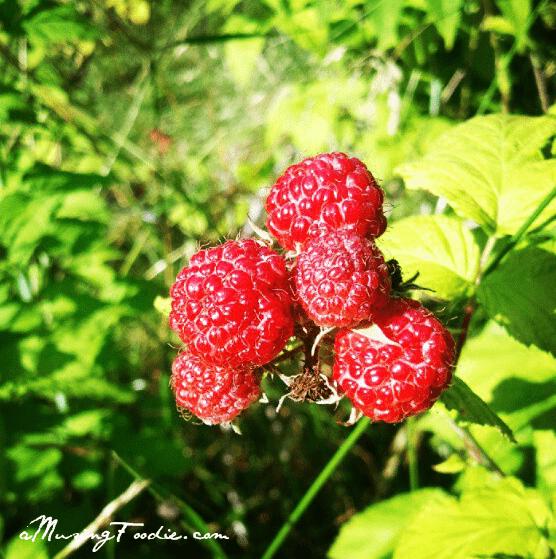 Raspberries on the Farm
