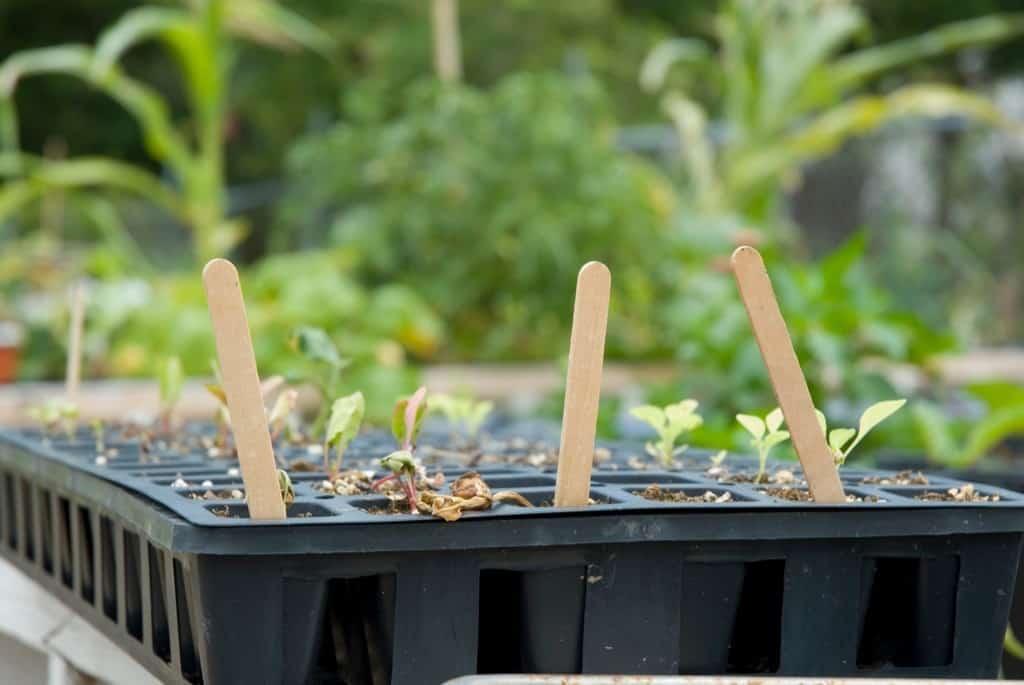 Popsicle Nostalgia: gardening sticks!