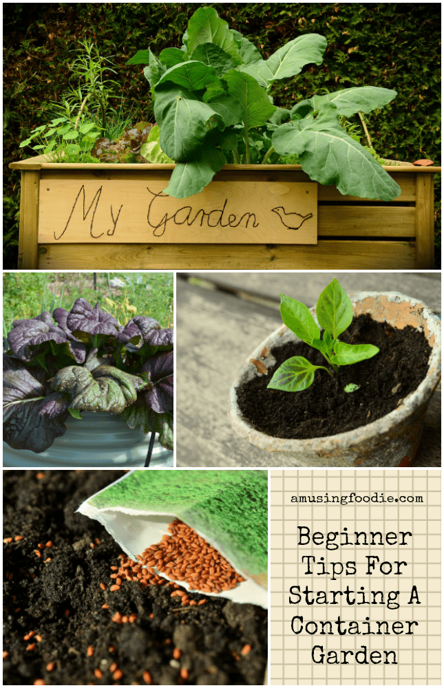 Beginner Tips For Starting A Container Garden
