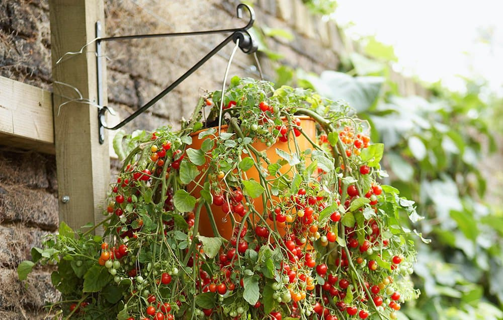 Hanging Garden Baskets: NAILED IT!